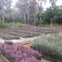Jardín Botánico 'Majarromaque'