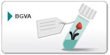 Banco de Germoplasma Vegetal Andaluz (BGVA)