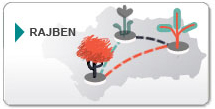Red Andaluza de Jardines Botánicos y Micológico en Espacios Naturales (RAJBEN)