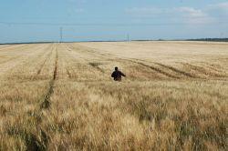 Cultivo cereales