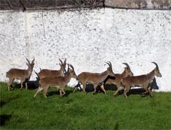 Estación de referencia de la cabra montés en Andalucía