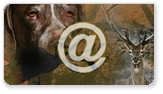 Servicio de información por correo electrónico