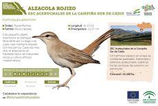 Alzacola rojizo