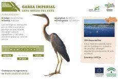 Garza imperial