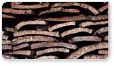 Distribución de los bosques andaluces