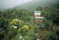 Cámara de cría de abejas