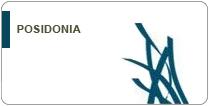 Life Posidonia