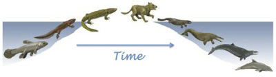 Scheme of the vertebrate's evolutive process