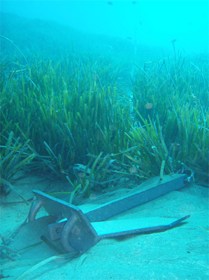 Anchor and chain over a Posidonia meadow. Source: