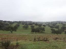 Paisaje de un campo con olivos