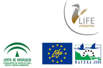 Logos del proyecto