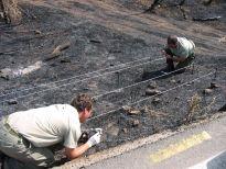 Agentes investigando incendio forestal