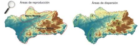 Amplia a nueva ventana: Distribución de los núcleos reproductores y de las áreas de dispersión del águila perdicera en Andalucía
