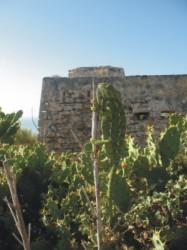 Camaleón adulto en las ruinas del Castillo de Santa Catalina (Puerto de Santa María, Cádiz)