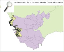 Amplía a nueva ventana:Parcelas objeto de estudio de la distribución del camaleón común en Cádi