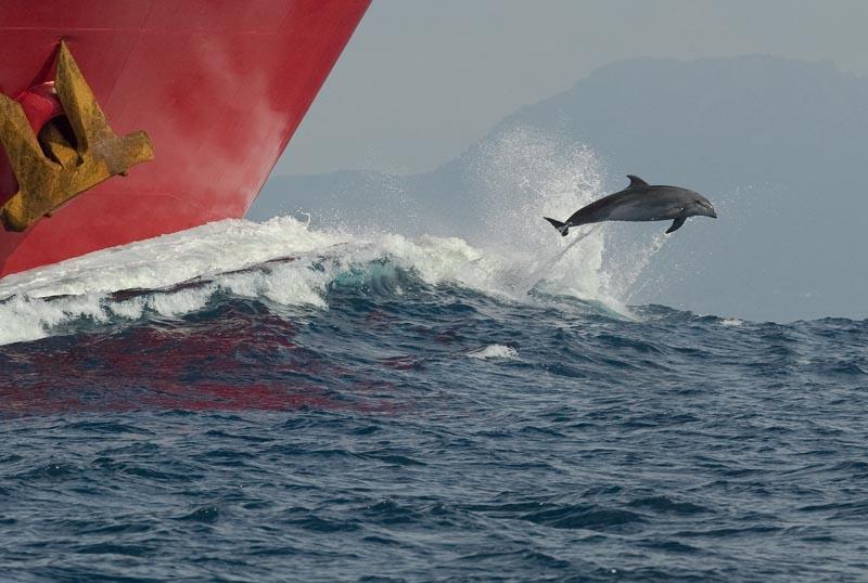 Abre en nueva ventana: Premio paisaje, 'Delfín en el estrecho'