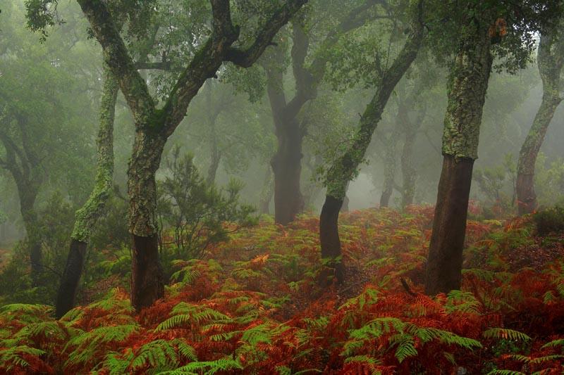 Abre en nueva ventana: Premio paisaje, 'Alcornocal en la niebla'