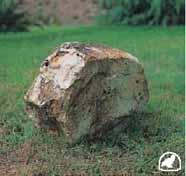 Grandes cristales de berilio y granate en las pegmatitas