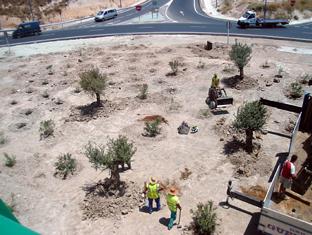 Actuaciones de restauración paisajística en una vía andaluza.