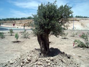 Las actuaciones se plantean con criterios de restauración vegetal.