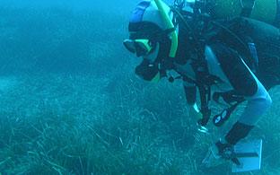 Trabajos de evaluación de las colonias de Posidonia oceánica.