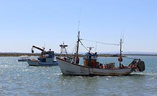 Barcos de la flota de arrastre y cerco del Golfo de Cádiz, que recibirá ayudas por la parada biológica.