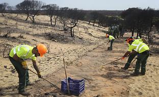Trabajos de recuperación de la zona, el pasado mes de julio. (Archivo EFE)
