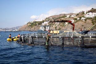 Las ayudas están dirigidas a fomentar una acuicultura sostenible desde el punto de vista medioambiental, innovadora, competitiva y basada en el conocimiento.