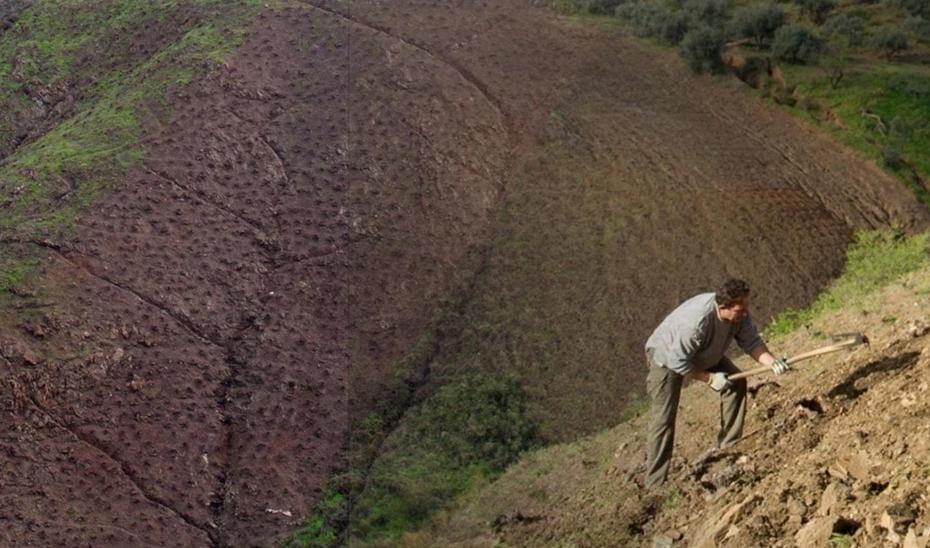 El sector de la agricultrura ha sido uno en los que ha bajado el paro en Andalucía en el mes de noviembre.