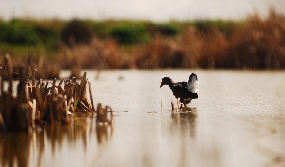 Andalucía cuenta en la actualidad con 205 humedales, con una superficie de 136.616,89 hectáreas.