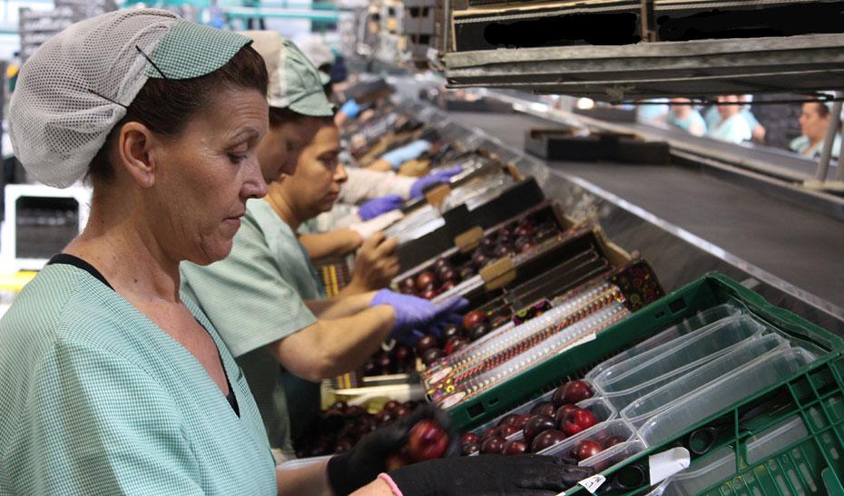 Andalucía posee algo más de 7.000 empresas agroalimentarias, que suponen 46.000 ocupados, el 37% mujeres.