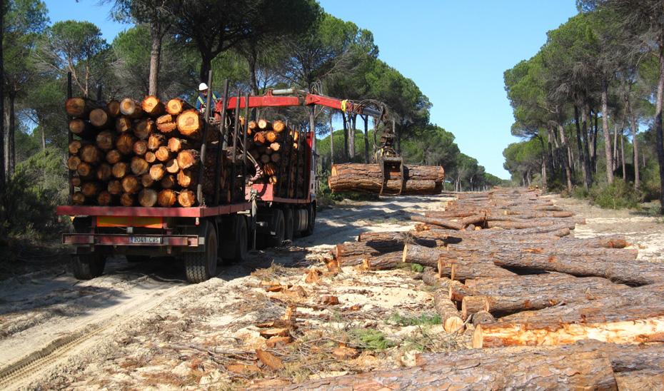 La Consejería ha extraído más de 33.000 toneladas de madera y biomasa de los montes públicos andaluces.