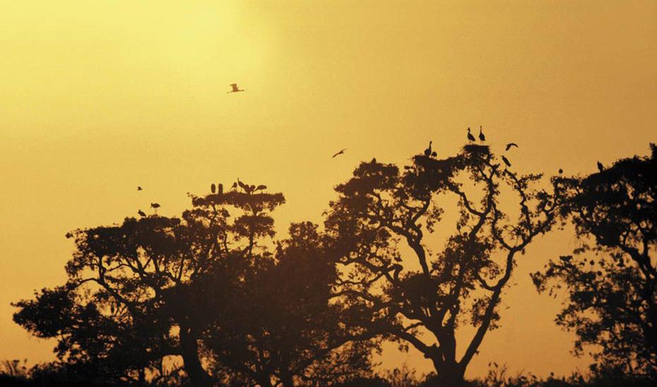 Aves en el Parque Nacional de Doñana.