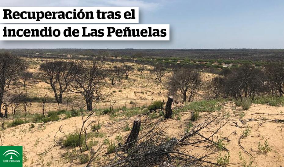 Animación gráfica obras recuperación incendio Peñuelas