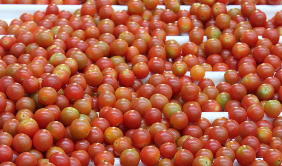 Imagen de unos tomates.