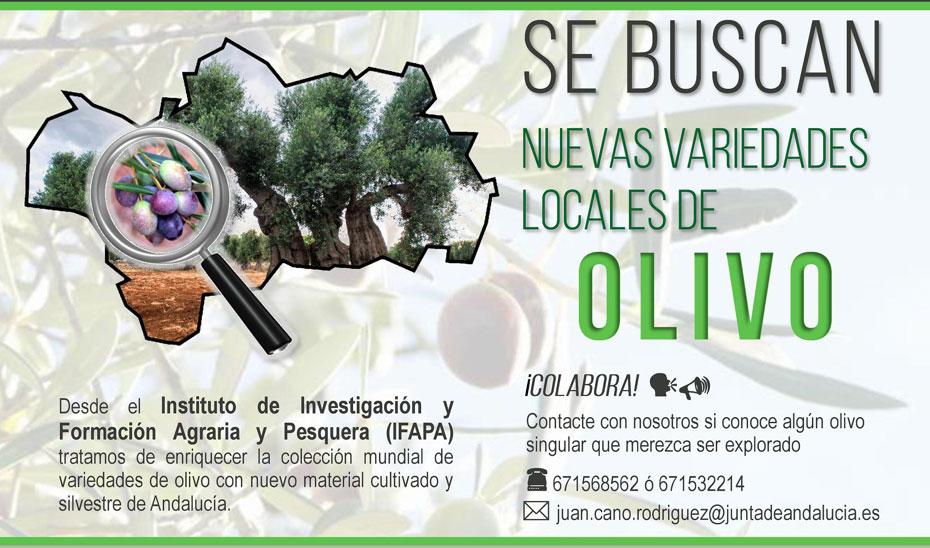 Cartel de la campaña para reunir nuevas variedades locales de olivar.