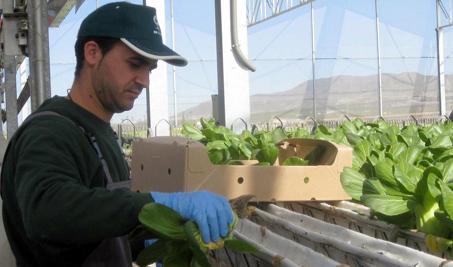 Los jóvenes agricultores andaluces pueden optar hasta el 14 de diciembre a la última convocatoria de ayudas publicada en BOJA.