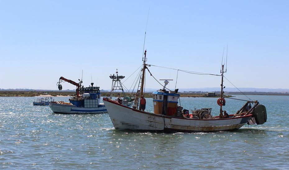 Varios barcos pesqueros de arrastre y cerco.