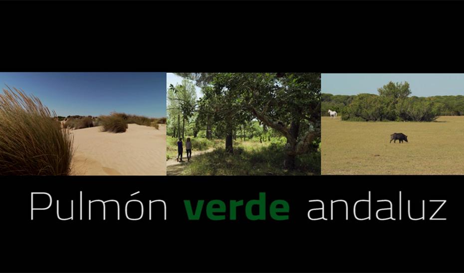 50 aniversario del Parque Nacional de Doñana: Pulmón verde andaluz