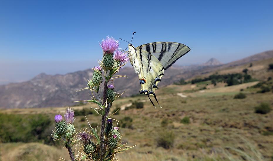 Sierra Nevada: la montaña de las mariposas
