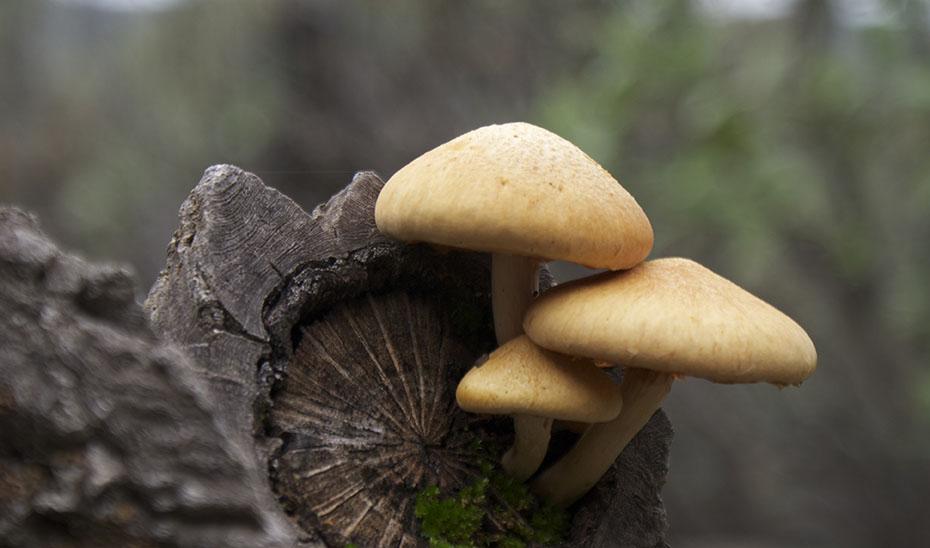 Andalucía es una tierra privilegiada en diversidad micológica.