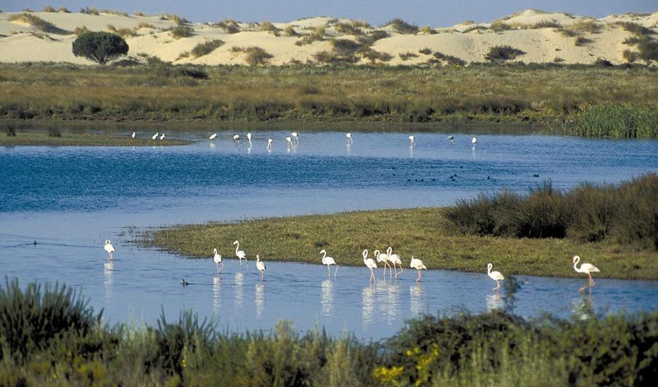 Aves en el Parque Natural de Doñana.