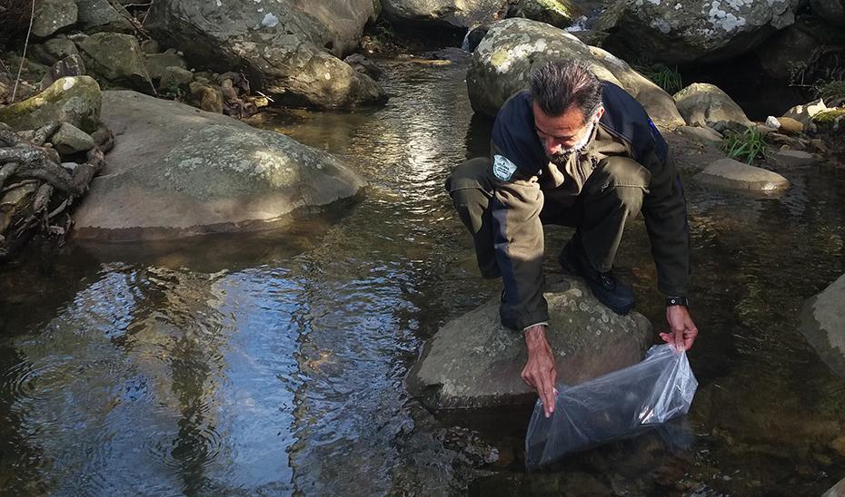 En 2018, se devolvieron a los ríos andaluces más de 460 kg de angulas en los tres primeros meses del año