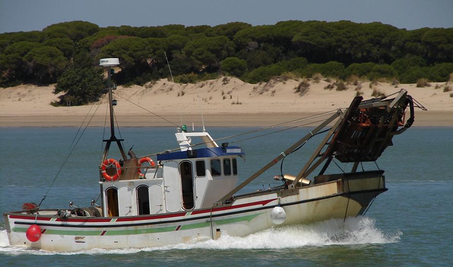 En el Golfo de Cádiz tienen su base 96 embarcaciones que se dedican de forma exclusiva a la chirla.