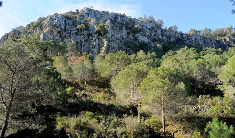 Monte Jabalcuza, en la provincia de Málaga.