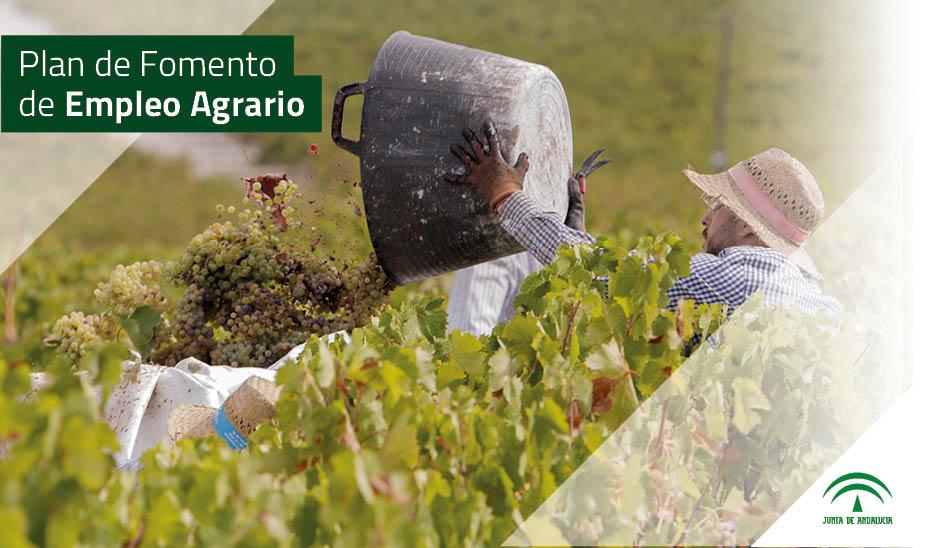 La Junta financia con 54,4 millones de euros el Plan de Fomento de Empleo Agrario en 2019