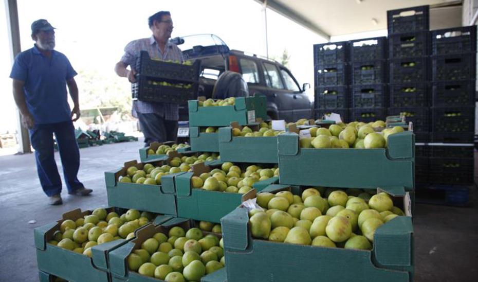 Las ayudas se destinarán a productores de frutas y hortalizas.