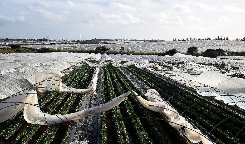 El temporal acarreó diversos daños en cultivos agrícolas.