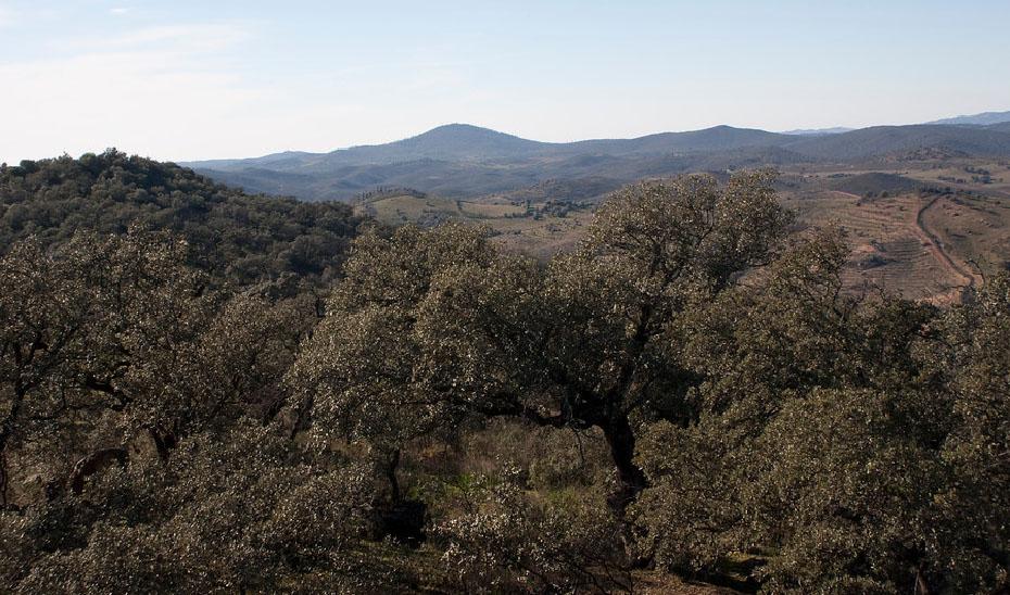 Zona forestal Cerro del Andévalo, en Huelva.