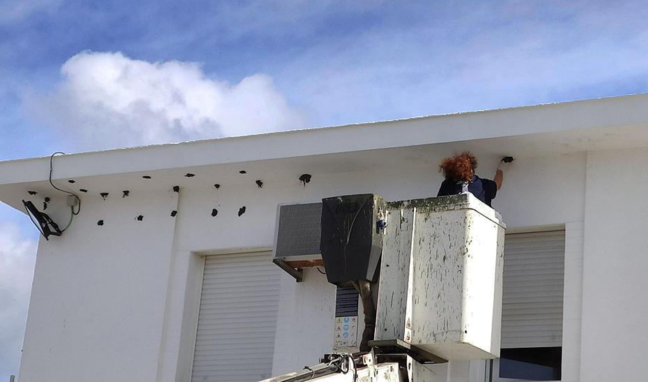 Un trabajador coloca bolsas de barro para que los aviones lo utilicen para preparar sus nidos.